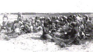 Pflanzen wurden auf dem Feld sortiert und gebündelt
